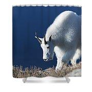 Rocky Mountain Goat Shower Curtain