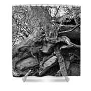 Roots Of Life Shower Curtain by David Lee Thompson