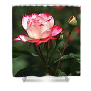 Rose And Bud At Mcc Shower Curtain