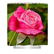 Rose Flower Shower Curtain