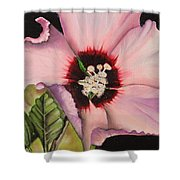Rose Of Sharon Shower Curtain by Karen Beasley
