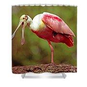 Roseate Spoonbill Shower Curtain