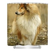 Rough Collie Dog Shower Curtain