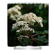 Rowan Flowers Shower Curtain