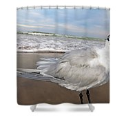 Royal Tern Shower Curtain