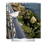 Royal Tern In Florida Shower Curtain