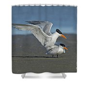Royal Terns Shower Curtain