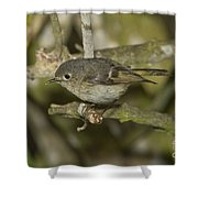 Ruby-crowned Kinglet Shower Curtain