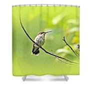 Ruby-throated Hummingbird - Immature Female - Archilochus Colubris  Shower Curtain