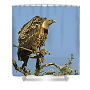 Rueppells Vulture Shower Curtain