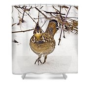 Ruffed Grouse Walking On Snow - Horizontal Shower Curtain