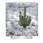 Saguaro Cactus After Rare Desert Shower Curtain