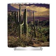 Saguaro Cactuses In Saguaro National Park Shower Curtain