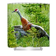 Sandhill Crane Shower Curtain