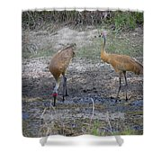 Sandhill Stork Shower Curtain