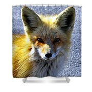 Say What Human? Shower Curtain