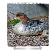 Scaly-sided Merganser Hen Shower Curtain