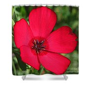 Scarlet Flax Shower Curtain