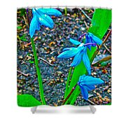 Scilla In New Maiden Cemetery In Moscow-russia  Shower Curtain