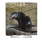 Sea Lion Pup Shower Curtain