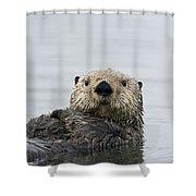 Sea Otter Alaska Shower Curtain