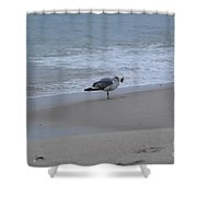 Seagull And Starfish  Shower Curtain
