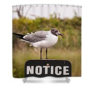 Seagull Standing On A Notice Sign Shower Curtain by Alex Grichenko