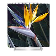 Seaport Bird Of Paradise Shower Curtain