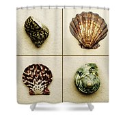 Seashell Composite Shower Curtain