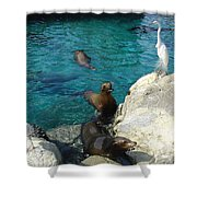 Seaworld Sea Lions Shower Curtain