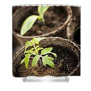 Seedlings  Shower Curtain by Elena Elisseeva