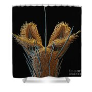Sem Of Stable Fly Foot Shower Curtain