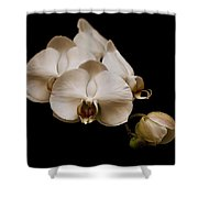 Sepia Orchids Shower Curtain