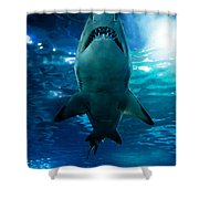 Shark Silhouette Underwater Shower Curtain