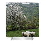 Sheeps Shower Curtain