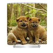 Shiba Inu Puppies Shower Curtain