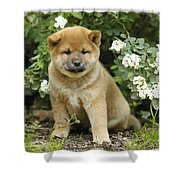 Shiba Inu Puppy Dog Shower Curtain