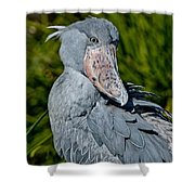 Shoebill Stork Shower Curtain