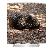 Short-beaked Echidna Shower Curtain