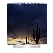 Silhouetted Saguaro Cactus Sunset At Dusk Arizona State Usa Shower Curtain
