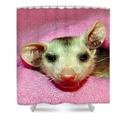 Silly Gal Shower Curtain