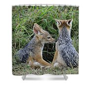 Silver-backed Jackal Pups Shower Curtain