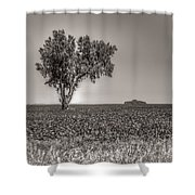 Single Tree In The Bean Field Shower Curtain