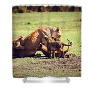 Small Lion Cubs With Mother. Tanzania Shower Curtain