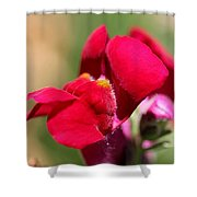 Snapdragon Named Red Chimes Shower Curtain