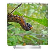 Snowberry Clearwing Hawk Moth Caterpillar - Hemaris Diffinis Shower Curtain