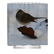 Snowbird Shower Curtain