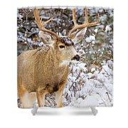 Snowstorm Deer Shower Curtain