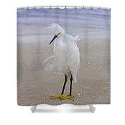 Snowy Egret At The Beach Shower Curtain