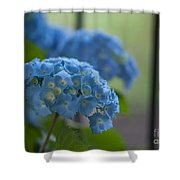 Soft Blue Hydrangea Shower Curtain